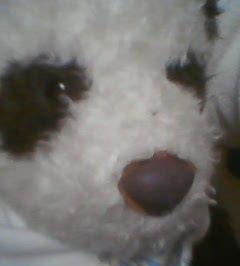 パンダのパンちゃん。